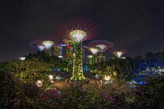 Celebrate Gardens by the Bay's 5th anniversary! Rhaposdy Gardens, Singapore (gintks) Tags: gintaygintks gintks gardensbythebay gbtb singaporetourismboard exploresingapore yoursingapore gardenbythebay
