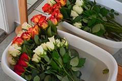 Wanda tahtis palju lilli - kas piisab? (anuwintschalek) Tags: nikond7000 d7k 18140vr austria wienerneustadt niederösterreich kodu home interiour peegel spiegel mirror peegeldus spiegelung reflection matura wanda rroosid rosen roses vann wasser vesi wanne koolilõpetamine