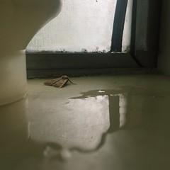 (emeraldperez) Tags: light greentint iphone bug rain shower reflection water moth