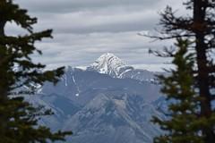 Snow cap (naromeel) Tags: banff canada nature