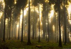 Goiz Saldropo.ti1f (juan luis olaeta) Tags: natura naturaleza bosque forest contraluz amanecer canon canoneos60d sigma1020 photoshop saldropo bizkaia paisvasco euskalherria basquecountry