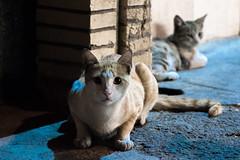 C'est le feu qui n'ndommage pas à la beauté. (- Ali Rankouhi) Tags: iran cat night streets ایران گربه تهران شب tehran