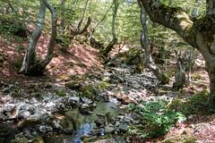 Faedo de Ciñera (cvielba) Tags: leon arroyo bosque ciñera espacionatural hayedo montaña