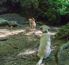 VizesesPasztell 0604-1225 (adam.leaf) Tags: canon 6d 24105l leafling paprikas vizeses waterfall nature hungary
