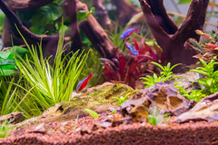 _MG_9815 (dearwalrus) Tags: eheim vivaline 330 canon 70d sigma 1750 acuario aquarium