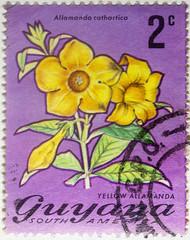 Guyana 2 cents Allamanda