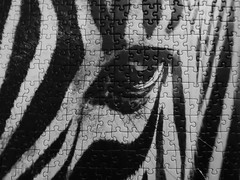 Zebra puzzle (François Tomasi) Tags: zèbre zebra françoistomasi yahoo google flickr nikon reflex noiretblanc animal pointdevue pointofview pov france europe blackandwhite lights light lumière photo photography photographie photoshop jeu game