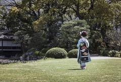 Maiko_20170419_69_32 (kyoto flower) Tags: shoseien garden fukuno kyoto maiko 20170419 舞妓 渉成園 ふく乃 京都 paulvanderveer maikofukuno japan japanesegarden karyukay kagai sakura kimono miyagawacho kawayoshiokiya kanzashi obi openmatome flowertourism