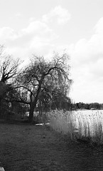 Old willow at the dark lake (Rosenthal Photography) Tags: schleswigholstein asa400 bistensee töpferhaus landschaft seehotel see ilfordxp2 c41 35mm bw 20170502 olympus35rd analog ff135 lake spring clouds olympus 35rd 40mm ilford xp2 blackandwhite landscape trees