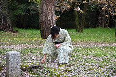 Fallen Beauty (johnshlau) Tags: fallenbeauty fallen beauty falling kimono costume cherrytrees kyotobotanicgarden 京都府立植物園 botanicgarden cherryblossoms cherry blossoms petals bloom tree garden sakura lawn ground kyoto japan flowers flora nature pink spring springtime さくら 桜