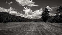 Beautiful Vermont 1 (CTfoto2013) Tags: champ landscape paysage clouds nuages trees arbres rural bucolic bucolique pre field summer ete noiretblanc blackandwhite blancoynegro nb bn bw lumix panasonic gx7 mirrorlesscamera micro43 newengland vermont rupert vt mountains montagnes depthoffield perspective dof greenmountains light lumiere shadow ombre america champetre vacances vacation paisible quiet peaceful calme relaxing