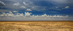 Fascinating Vastness (AnyMotion) Tags: savannah savanne grassland sky himmel clouds wolken weite 2015 anymotion southern südlich serengetinationalpark ndutuarea tanzania tansania africa afrika travel reisen nature natur wildlife 7d2 canoneos7dmarkii landscape landschaft landschaftsaufnahmen panorama