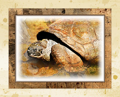 TURTLE (mfuata) Tags: turtle kaplumbağa nature doğa life yaşam ecology ekoloji distance mesafe yol reach ulaşmak slow yavaş decisive kararlı