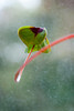 A little twist (not without my camera_) Tags: 2017 digital zoomlens 24105mm 365 365in2017 365challenge 365project dailyphoto photoaday picaday pad2017 everyday dailylife quotidian mundane life flowers plant clover fourleafclover lucky shamrock luckycharm luck symbol symbolic bokeh dof depthoffield selectivefocus green availablelight naturallight growing growth copyspace space twist twirl nature bookcover bookcovermaterial potentialbookcover resilience flexibility