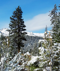 New Snow on Crystal Crag, Mammoth Lakes, CA 5-16-17 (inkknife_2000 (8 million views +)) Tags: mammothca springsnowstorm treeswithsnow sierranevadarange freshsnowonground waterreflection usa landscape snow dgraham photo california newsnow morningsnow twinlakes crystalcrag forest trees pines firs