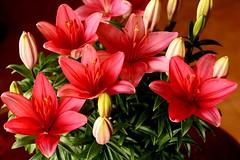 Flores (Xaviort) Tags: macrofotografía flor jardín brillante