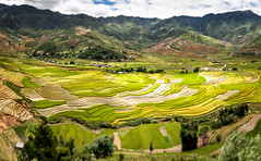 Cascade of rice fields (Asian Hideaways Photography) Tags: asia asian rizière exterior rice ricefield travel travelphotography terrace vietnam paddy southeastasia green landscape mountain naturallight nature