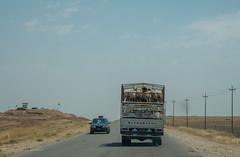 Dohuk and Sinjar Mountain  (213 of 267) (mharbour11) Tags: iraq erbil duhok hasansham babaga bahrka mcgowan harbour unhcr yazidi sinjar tigris mosul syria assyria nineveh debaga barzani dohuk mcgowen kurdistan idp