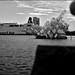 Oslo_SAS_5932