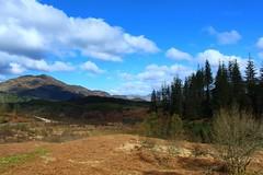 Trossachs Landscape (Eddie Crutchley) Tags: europe uk scotland thetrossachs outdoor landscape nature blueskies beauty trees mountain simplysuperb greatphotographers