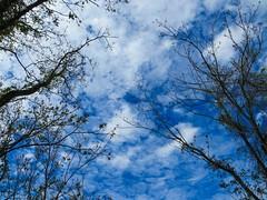 IMG_0599 (rpealit) Tags: scenery wildlife nature hyper humus