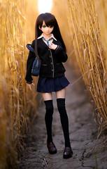 アフタースクール (Mei-) Tags: volks dollfiedream dollfie dd shibuya rin shiburin 渋谷凜