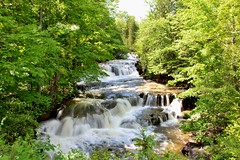 Stockbridge Falls  (Explored--Thank you!) (outdoorpict) Tags: waterfall stockbridge munnsville spring waterfull foamy fast rocky sunshine leaves green overgrown cascade noisy