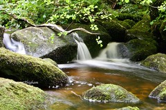Golden pool (Margaret Preuss-Higham) Tags: leaves trees miss iceage boulders green devon beckyfalls canon700d tranquil ethereal smoothe silky longexposure