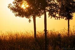 Enter the light... - Entrer dans la lumière ... (Sébastien Vermande (Only the Weekend)) Tags: canon7d france midipyrénées lot printemps spring panorama paysage landscape arbres trees contrejour backlight goldenhour sigma150exdg sigmaapoteleconverter14xexdg vermande