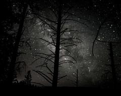 Tree Decorations (jpaulus) Tags: milkyway tree night sky stars forest distinguishedblackandwhite