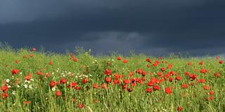 Poppy vs. Storm