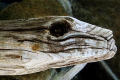 Skull (halukderinöz) Tags: natürmort still life wood odun skull kafatası sunay akın fatsa ordu türkiye turkey karadeniz blacksea canoneos350d eos350d hd