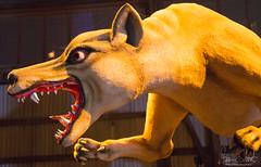 The Thylacine Ogoh Ogoh Attacks (bcshort) Tags: darkmofo night ogohogoh tasmania darkpark australia hobart
