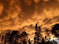 Mammatus clouds at sunset--Explored (yooperann) Tags: mamma mammatus cloud appreciation society pine trees sunset upper peninsula michigan marquette county dramatic
