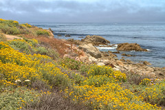 IMG_0100_102 Pebble Beach HDR (vicjuan) Tags: 20170625 美國 usa 加州 california montereycounty hdr tonemapping pebblebeach geotagged geo:lat=36608672 geo:lon=121953878 花 flower 海 sea 太平洋 pacificocean