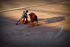 Doblon (aficion2012) Tags: istres francia france corrida bullfight bull toro toros taureau fundi elfundi juan pedro domecq tauromachie tauromaquia doblón matador torero toreo