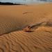 Rainbow Beach, Carlo Sandblow (blauepics) Tags: australia australien queensland qld landscape landschaft clouds wolken sand beach rainbow carlo sandblow düne dune sunrise sun sonnenaufgang morning light morgenlicht pattern muster texture