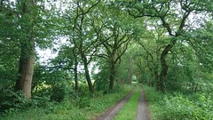 It's a green world where I live (Jos Mecklenfeld) Tags: slangenborg sellingen westerwolde groningen netherlands niederlande sonyxperiaz5 xperia landscape landschaft landschap road pad pfad hiking wandern wandelen