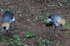 A DAY AT THE ZOO (erik.verheyen) Tags: dieren animals vogels birds reptielen amfibieën zoogdieren ongewervelden amphibians reptiles mammals invertebrates deolmensezoo dftjeugd
