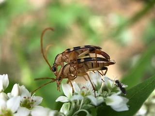 Nosy ant.