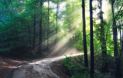 Sun on the road (Dejan Hudoletnjak) Tags: landscape nature forest eco uncultivated natural light sunrays rays path road bright