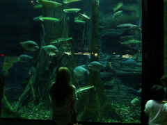 IMG_0238 (Alejandro Perez M.) Tags: medellin parqueexplora acuario