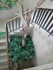 Interesting perspective and location for a tree (``` November Rain ```) Tags: stairs longwoodgardens kennettsquarepa plants flowers trees railing