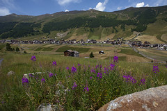 Epilobio (quanuaua) Tags: ifttt 500px field sky landscape nature flower travel summer grass countryside mountain valley hill rural outdoors wild grassland scenic hayfield valtellina no person livigno italy