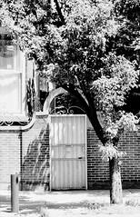 Kennsington_019_01 (mujetdebois) Tags: 35mm canonelan ilfordhp4plus blackandwhite orangefilter filmphotography filmlives filmisnotdead monochrome analogphotography blackandwhitephotography noirblanc черноеибелое negroyblanco biancoenero schwarzundweis