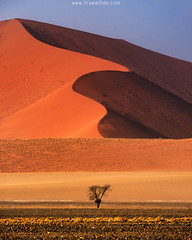 loneliness (Jirawatfoto) Tags: sand dunes dune namibia desert namib sossusvlei landscape africa nature red hot dry travel background shadow orange arid view blue sky sun savannah sunset scenic african ripples tree environment naukluft outdoor park texture surreal scenery drought natural panorama grass sunny tourism adventure