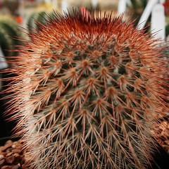 Don't touch! A prickly picture Los Angeles Cactus & Succulent Society Plant Show & Sale 2017 (lacactus.com) Spent an hour or so at the show on Saturday checking out all the great vendors and plants. #cactus #succulents #garden #plants #nature #LA #losange (dewelch) Tags: ifttt instagram dont touch a prickly picture los angeles cactus succulent society plant show sale 2017 lacactuscom spent an hour or saturday checking out all great vendors plants succulents garden nature la losangeles california iglosangeles losangelesgram whereamila instalosangeles caligrammers lagrammers losangelesgrammers discoverla conquerla unlimitedlosangeles californiacaptures uglagrammers iggarden flowersofinstagram flowerstagram treestagram rainbowpetals plantstagram