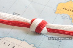 2-strand 3x2 2-pass lanyard knot (A L A N A) Tags: knot knots paracord turkshead lanyard stopper footrope thk button terminal facets strand узел бриллиант ring cylinder cylindrical alana forest alanaforest