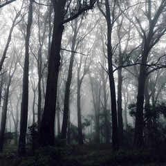 What lies in the shadows? (faerymama) Tags: magical creepy haunted woodland forest enchanted mist fog foggy misty nature natureporn trees southernhighlands bowral australia
