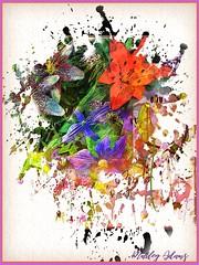Jean's garden (Beaches Marley.....iPad art) Tags: sonya7r ipad app ipadpropencil flowers abstract